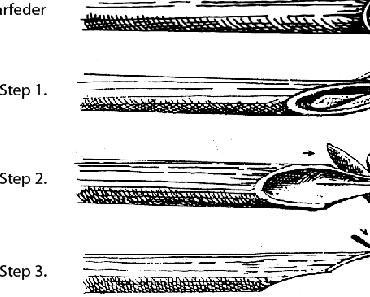 Rohrpinsel und Rohrfeder selber machen