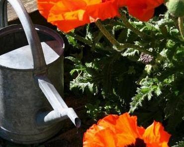 Sommer, Sonne, Rohkost – Zucchini-Bandnudeln mit Tomatensoße und Mandelparmesan