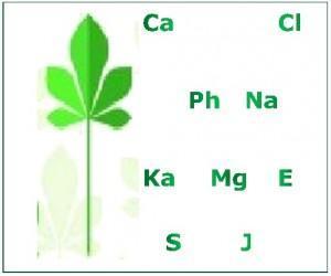 Kalzium – Mineralien und Spurenelemente sind wichtig für unser Leben