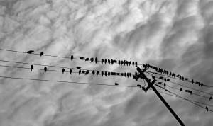 Bird's on a Wire