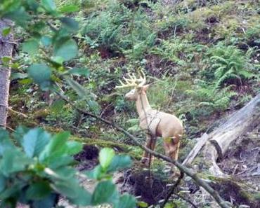 Von Hirschen, Eulen und Dummys