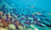 TUI Cruises engagiert sich für Meeresschutz- und Meeresforschung: Reederei unterstützt Projekte von Helmholtz-Zentren
