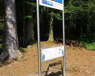 Das Tram im Wald