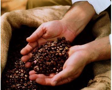 Der Weg der Kaffeebohne: Vom Erzeugerland bis ins Kaffeehaus