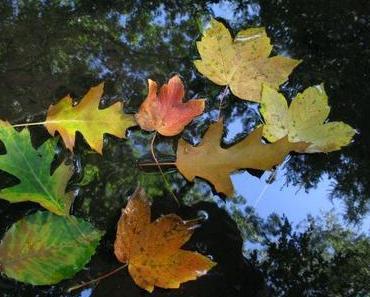 Herbstliche Dessous mit Achterbahn und Pimpernuss