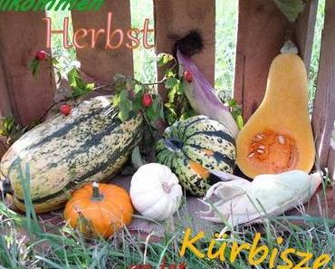 Buch; Kürbis aus dem NG Verlag;  Die Besten Rezepte für Kürbis & Zucchini