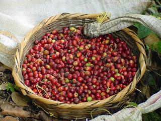 Bio-Kaffee aus Costa Rica (Fairtrade)