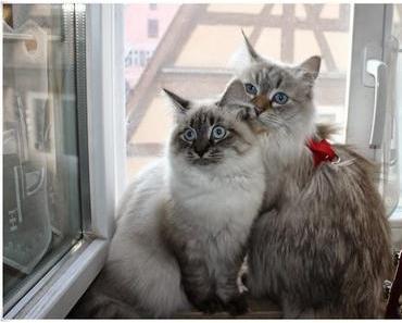 Auch Katzen mögen den Herbst