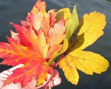 Der Herbst, eine Schaukel und Adel Tawil