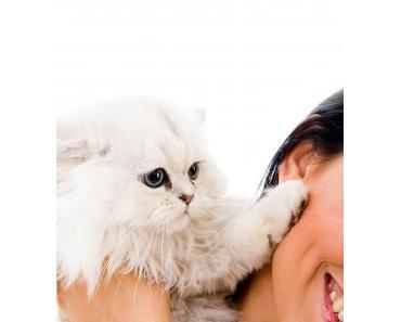 Katzenallergie – Wenn der Stubentiger im wahrsten Sinn des Wortes reizend ist