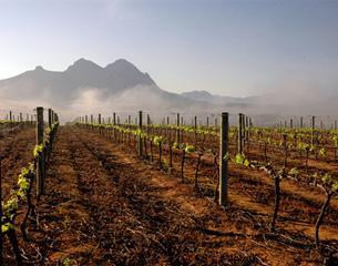 Weingut Delheim aus Südafrika / Stellenbosch