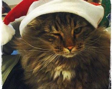 Tiere unterm Weihnachtsbaum?