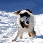 Mit dem Hund in den Winterurlaub