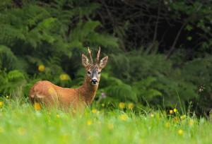 Jagdreisen in Europa – Die Vielfalt der Natur entdecken