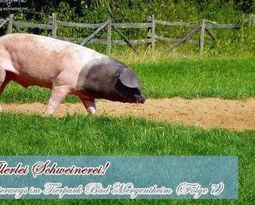 Tierpark Bad Mergentheim - allerlei Schweinerei (Folge 7)