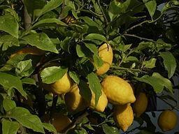 Limonaden, Lassies – lecker  … denn sauer macht lustig