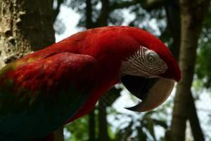 Coiba Nationalpark – Panama