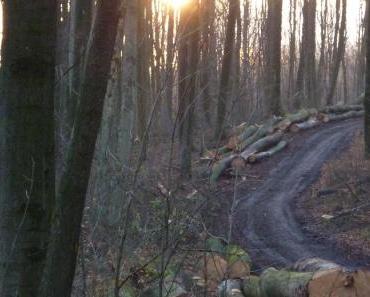Alles muss raus: Deutsche Wälder werden platt gemacht