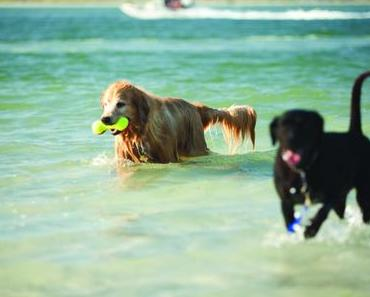 Pet Travel Revisions Final