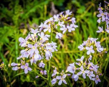 Ehrentag des Unkrauts – der amerikanische Weed Appreciation Day