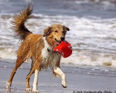 Die besten Hundestrände in Deutschland
