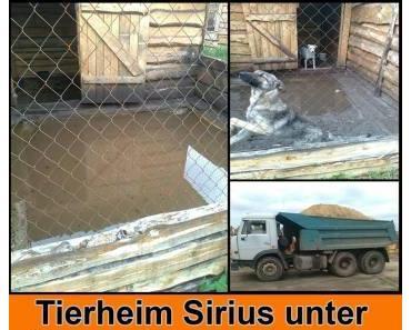 Sirius steht unter Wasser- 2000 Tiere kämpfen um ihr Überleben !!