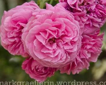 Aus meinem Garten: Mai (2)