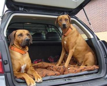10 Tipps für Autoreisen mit Hund