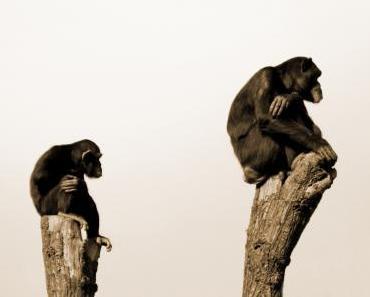 Warum wir heute noch Affen sind
