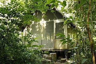 Im Dschungel - Serere Nacional Reserve