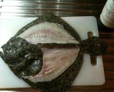 plattfische filetieren, das wollte ich schon immer lernen…
