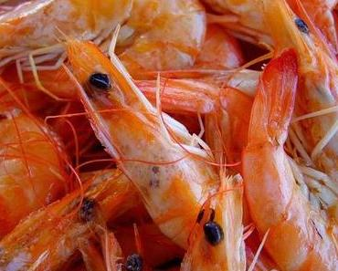 Das ist ja echt zum Kotzen! Schmecken Ihnen nach diesem Artikel noch Shrimps ?