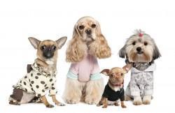 Das teuerste Hundefutter der Welt