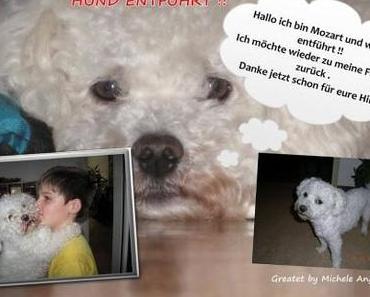 Hund entführt !