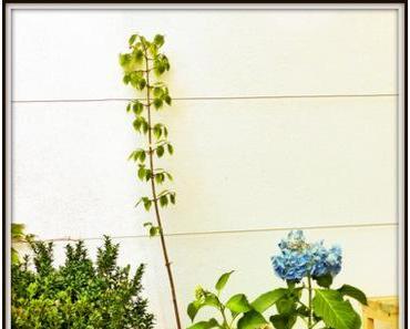 Stecklinge aus Gartenpflanzen