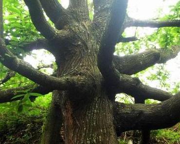 Keltisches Baumhoroskop und ein Einblick in keltische Feiertage