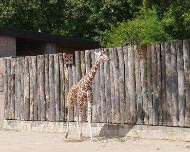 {Veggie Life #6} Streitthema Zoo