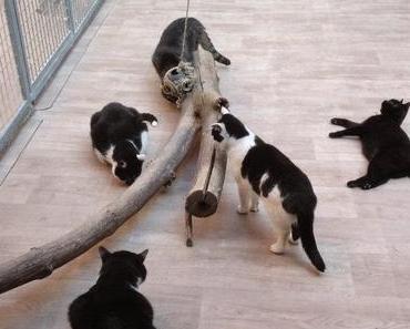 Das Katzenhaus Halle stellt sich vor..