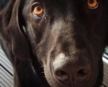 Simone und 16 Pfoten – immer in Sachen Hund unterwegs