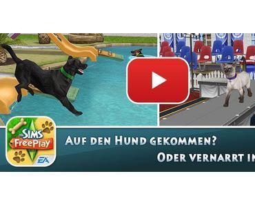 Haustiere erwünscht: Katzen & Hunde in Die Sims FreePlay erziehen und pflegen