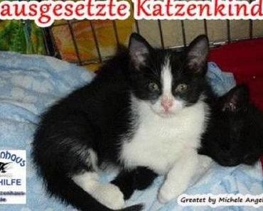 3 ausgesetzte Katzenkinder von 7 Wochen in 37688 B