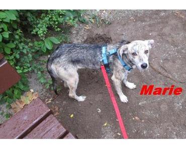 Marie wünscht sich einen Kameraden und Futtergeber von ganzem Herzen!