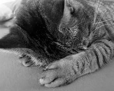 So machst Du Karriere !!  Die sagenhaften Eigenschaften einer Katze ...