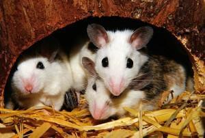 Sind Tierversuche gerechtfertigt?