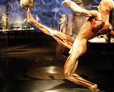 [Körperwelten] Menschen Museum – Facetten des Lebens – heute eröffnet