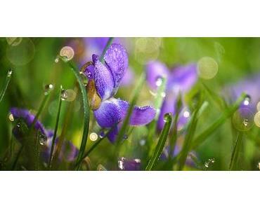 Bild der Woche: Wiesenblumen im Morgentau
