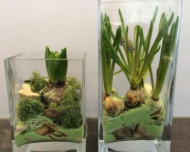 Biologiestunde in der Stube: Blumenzwiebeln im Glas