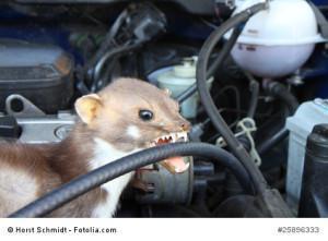 Das Auto vor dem Marder schützen