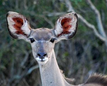 reiseabenteuer // südafrika // safari im krügerpark