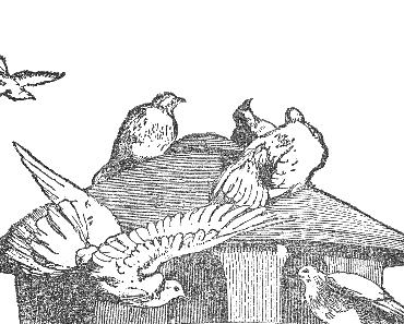 Die Taube und die Krähe • Freude und Leid • Fabel von Aesop